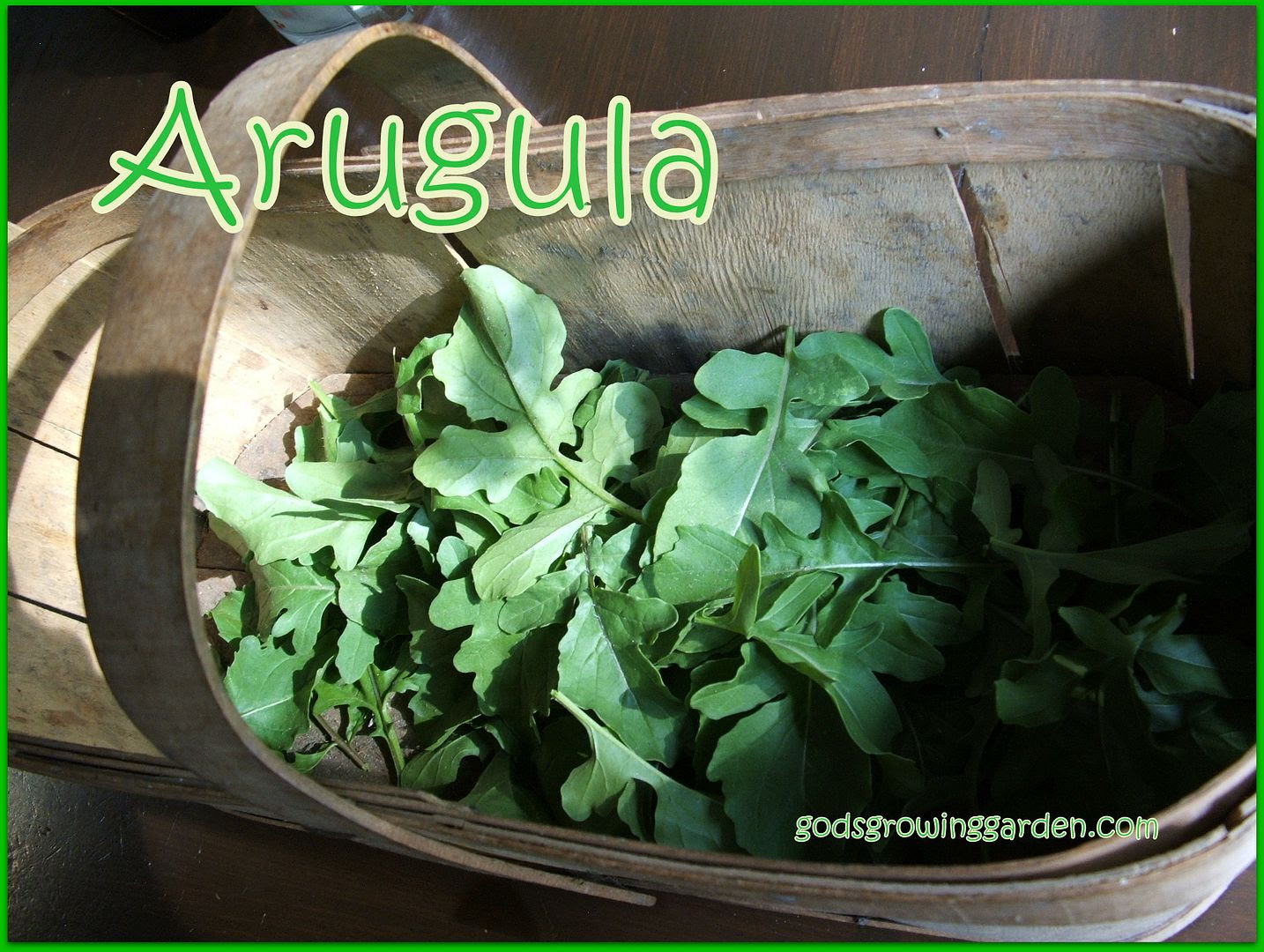 Arugula by Angie Ouellette-Tower for godsgrowinggarden.com photo 009_zpsc4cebdfe.jpg