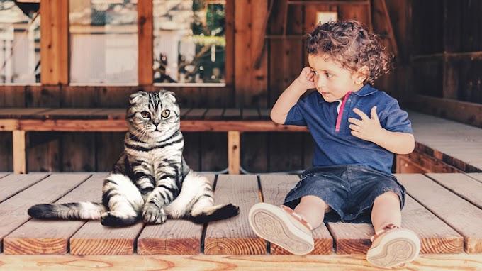 Los beneficios de los gatos en los niños