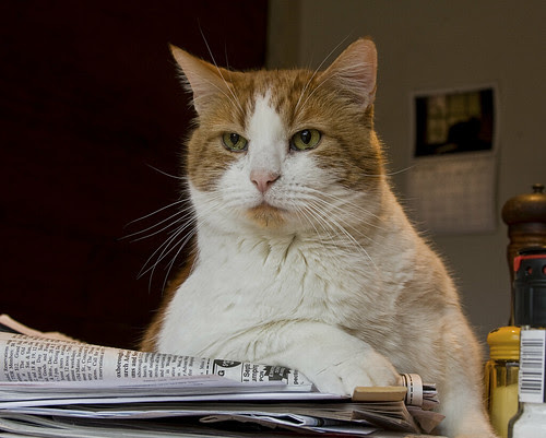 kitchen cat by Muffet