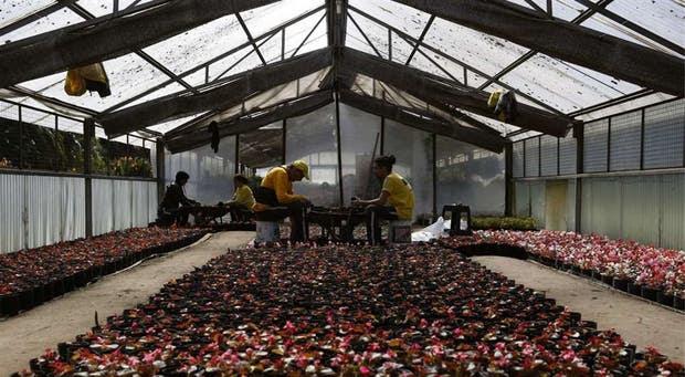 Dos hombres trasplantan las flores de estación de macetas pequeñas a otras más grandes