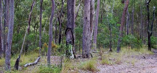 Survey Tree - Gavan Newman