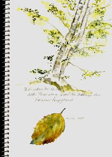 Alder tree and leaf