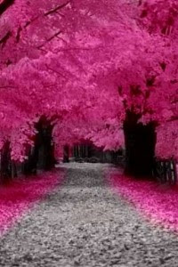 pink-leaves