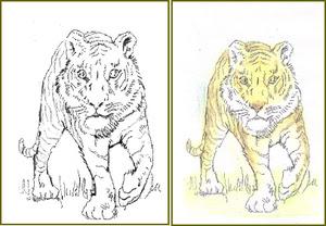 塗り絵の動物たち 子供へのプレゼント 塗り絵で癒し 風景画 花の絵