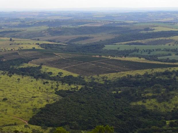 Consórcio realiza estudos com foco na preservação do cerrado mineiro (Foto: Divulgação/Federação dos Cafeicultores do Cerrado)