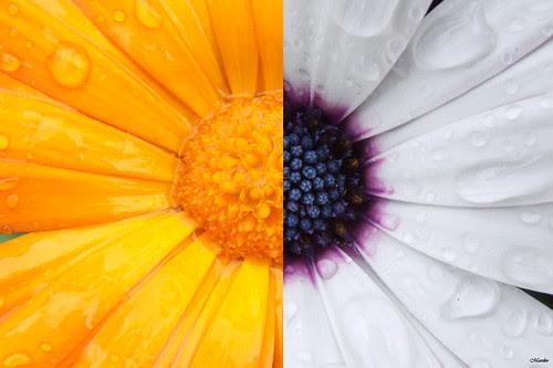 Flores, colores. by Manuel Venegas