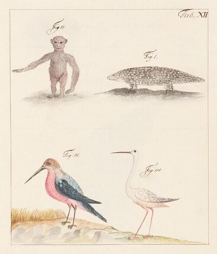 birds and stylised animals
