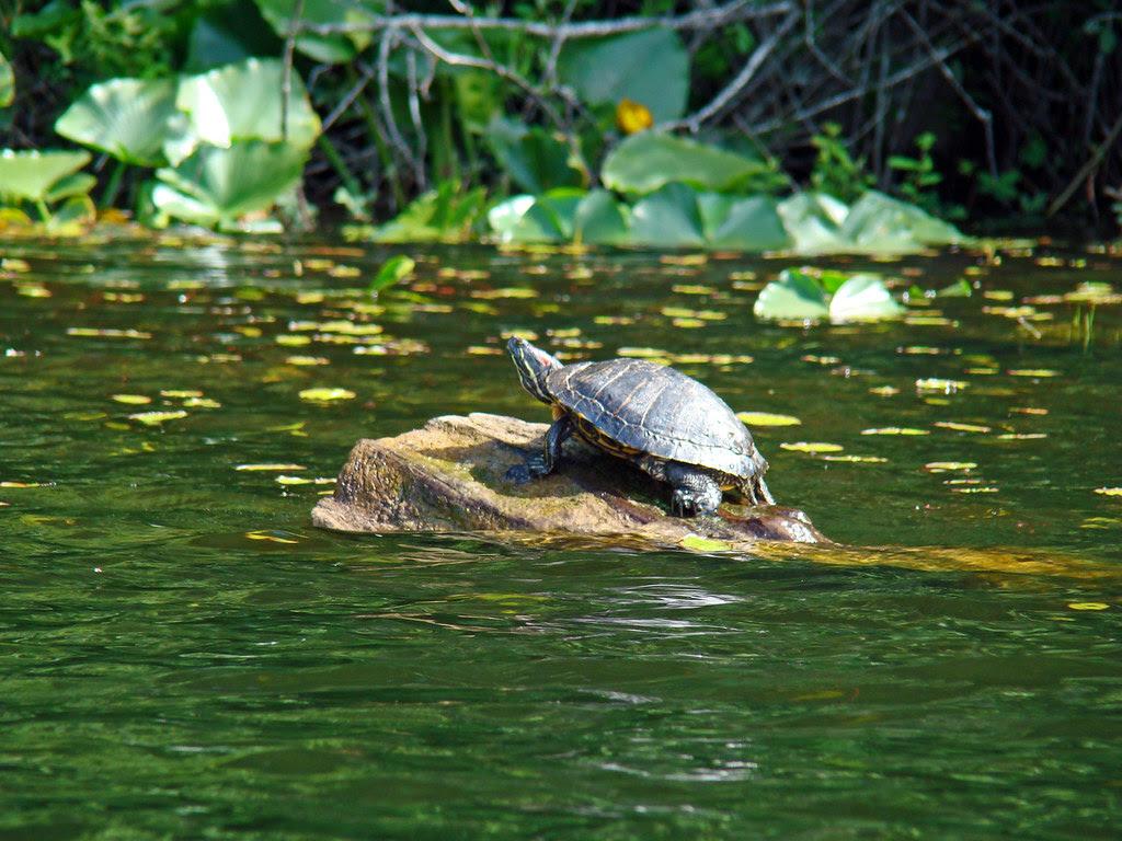 2010-06-07 Thetis Lake 091