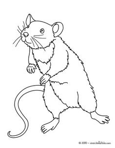 42 Cute Rat Coloring Pages Images & Pictures In HD