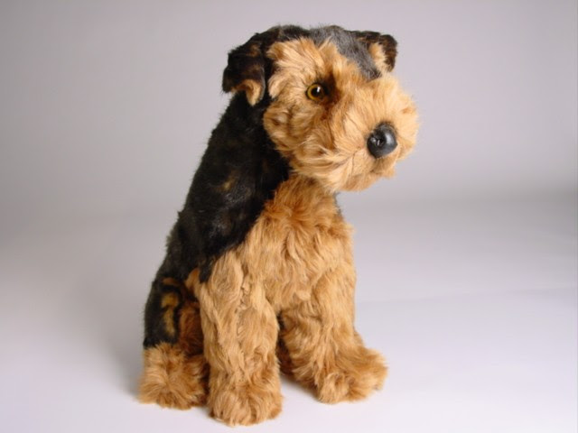 Airedale Terrier Puppy 2219  Airedale Terriers  Dogs