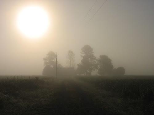 foggy nova 2