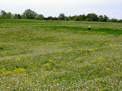 Paul rides through dandelion field