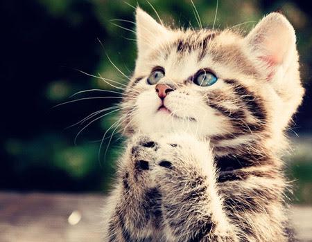 praying kitty