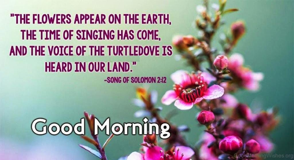 8 Good Morning Bible Quotes