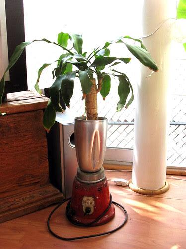 blender plant
