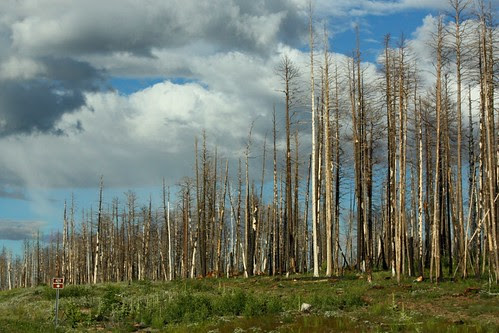 Forest after 2006 fire