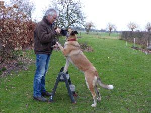 academia para cães