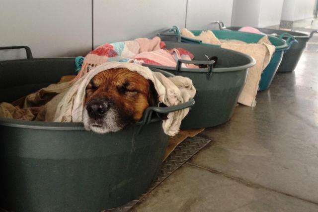 Posto de combustíveis abriga animais de rua em Porto Alegre Débora Ely/Agência RBS