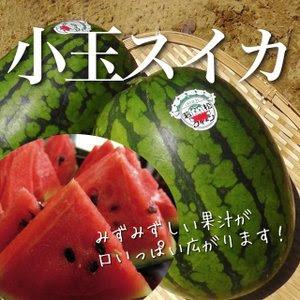 熊本県産 特選小玉スイカ