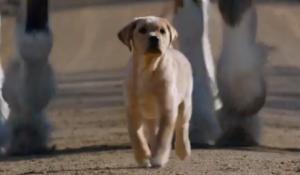 Budweiser Puppy Love