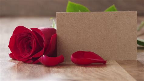 Slow motion of falling petals on single red rose on old
