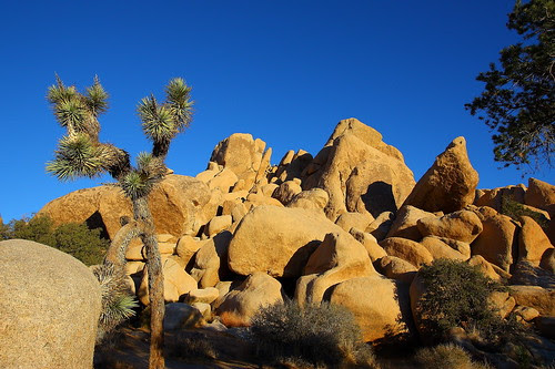 IMG_2131 Joshua Tree & Rock
