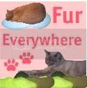 Fur Everywhere