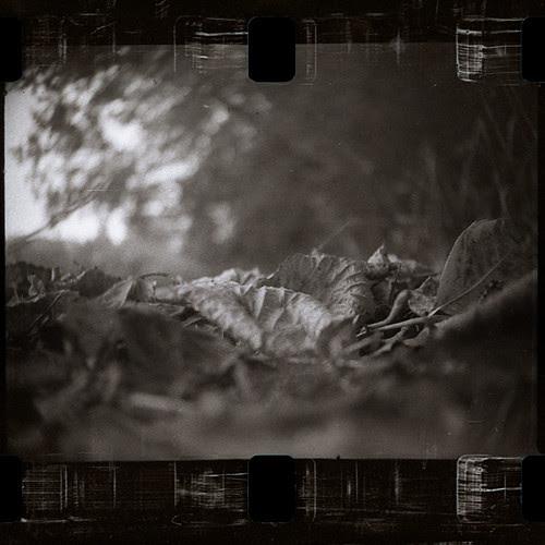 autumn leaves by pho-Tony