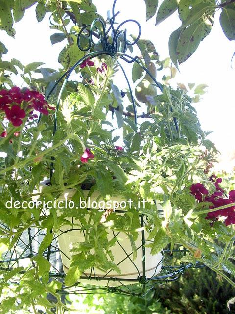 cestino porta-piante 4 con pianta