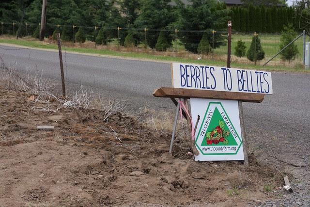 Berries to bellies biodynamic farm