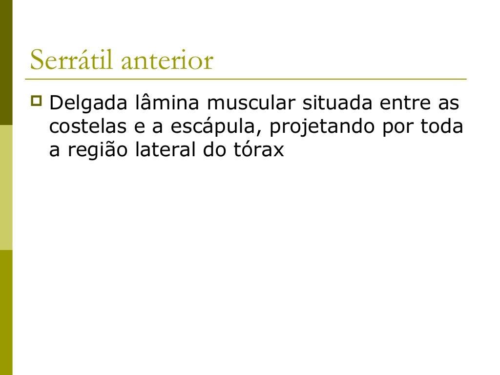 Músculos Toracoapendiculares         Posteriores