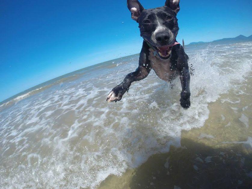 perierga.gr - Αξιαγάπητα σκυλιά περνούν όμορφες στιγμές στην παραλία