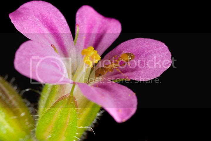 photo flor-formiga_zpsd7f7b2d6.jpg