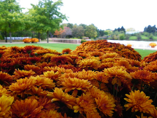 Chicago Botanic Garden (20)