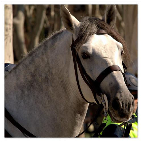 caballo policía