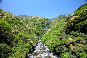 """Aya siempre verde de latifoliadas de Eco-Park que se registra en el archivo de la UNESCO.  Aya, prefectura de Miyazaki, en la parte posterior proporcionará visible = """"gran puente de suspensión brillo de la hoja"""""""
