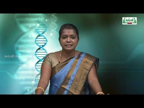 NEET Bio Zoology ,Immunity AIDS And Drug Addiction Kalvi TV