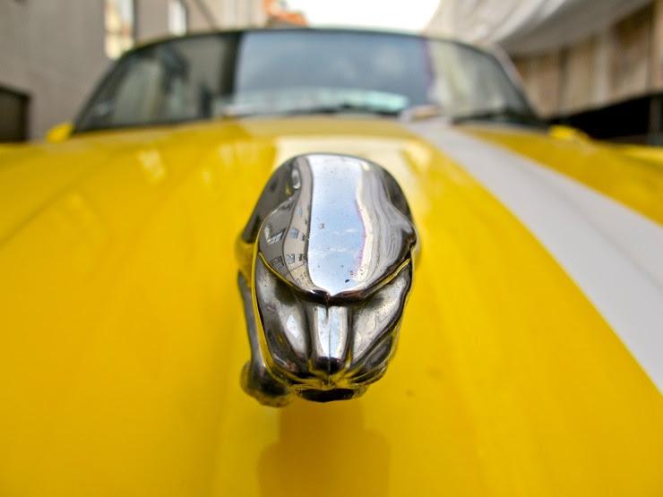 Yellow Jaguar