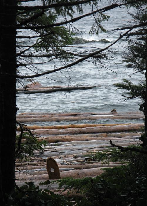 logs and other driftwood near Kasaan, Alaska