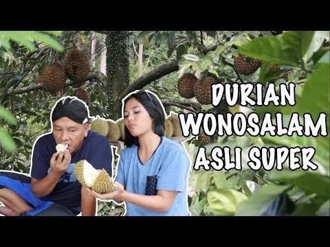 Durian Wonosalam Asli Super
