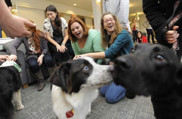 Cães visitaram na terça-feira o campus da universidade de Tufts em Medford, no estado de Massachusetts (EUA), na tentativa de ajudar os alunos a reduzir o estresse durante o período de prova final.