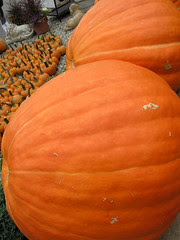 An October Farm Day! 14