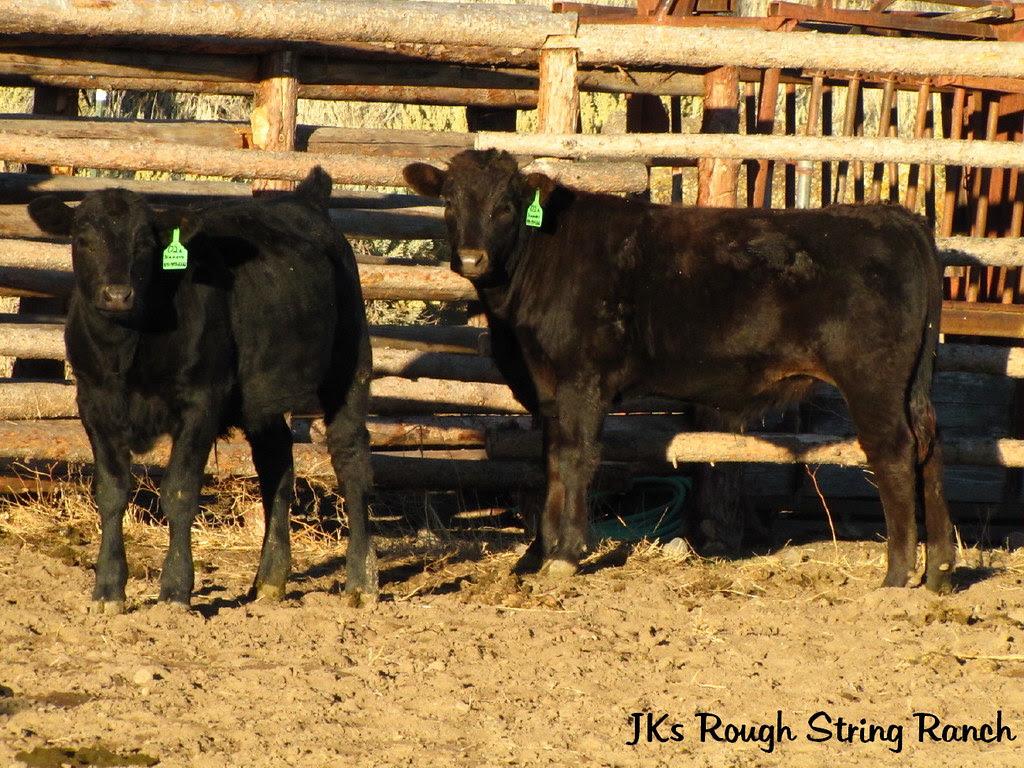 Black Calf & Brown Calf