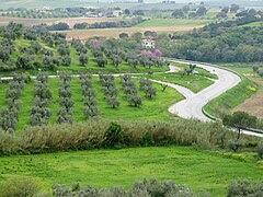 Maremma from Magliano 1