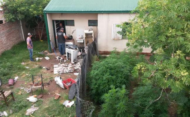 Santa Rosa | Incautan droga y desbaratan desarmadero