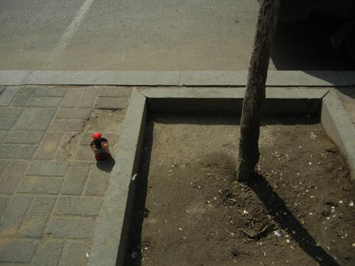 Flower Pot on Sidewalk, Shenyang _ 9052