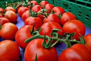 El tomate marroquí desplaza a Almería del mercado francés