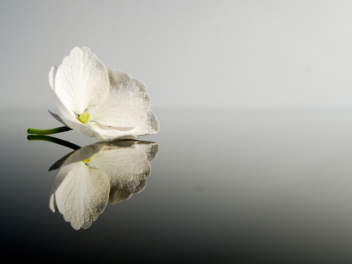 awesome-flower pictures