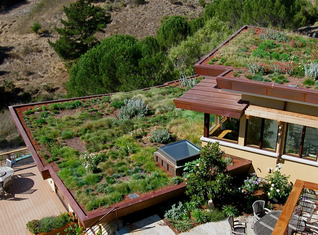 green house,green house design,house with green roof,roof house,rooftop garden,green house designs
