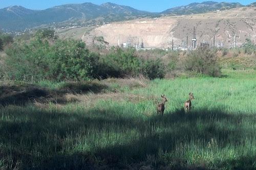 deer crop